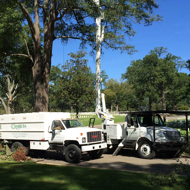 Commercial Tree Service Gulfport MS