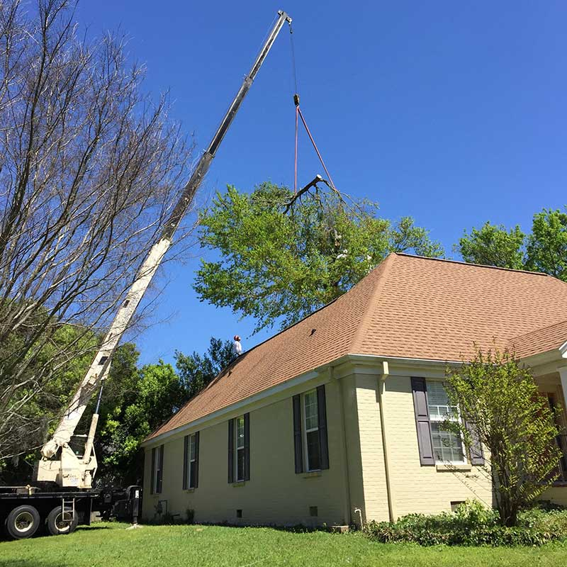 Residential Tree Service Pascagoula MS